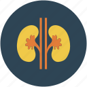 health, kidney, medical, renal icon