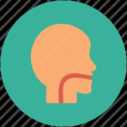esophagus, infection, throat, virus icon