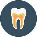 dental, human teeth, stomatology, tooth icon