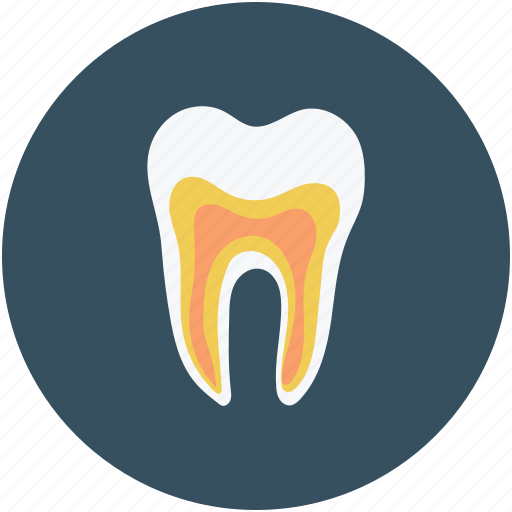dental, human teeth, stomatology, tooth icon