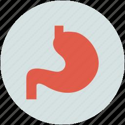 anatomy, human stomach, organ, stomach icon