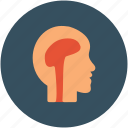 brain, head, human brain, mind icon