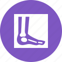 ankle, bones, examination, foot, image, leg, x ray icon