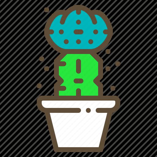 cactus, grafting, plant, pot, succulent icon