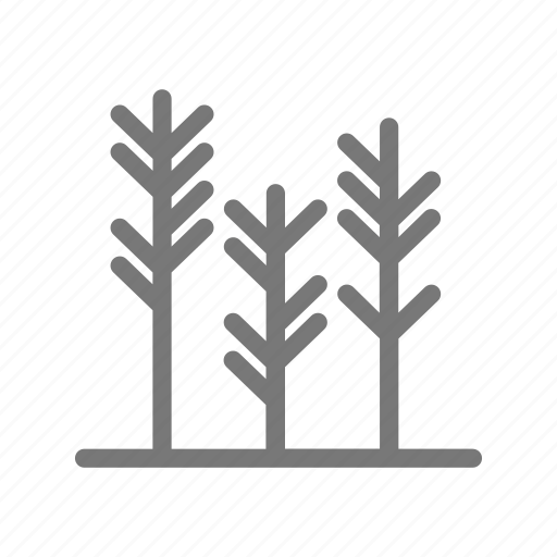 grass, grow, lawn, nature, plant, wheat icon