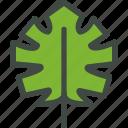 monstera, leaf, nature, ecology, botany, biology