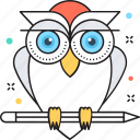 bird, education, owl, owl sage, wisdom icon