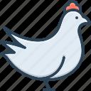 chicken, animal, cock, butcher, meat, hen, domestic