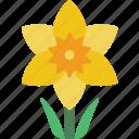daffodil, flower, plant icon