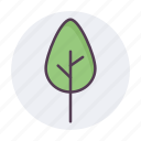 agriculture, ecology, forest, leaves, nature, plant, tree icon icon