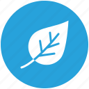 green, leaf, life, plant icon