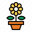 flower, plant, potted flower, potted plant, sunflower icon