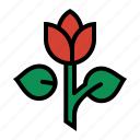 florist, flower, love, petals, romance, rose, tulip icon