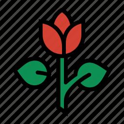 florist, flower, love, petals, romance, rose, tulip icon