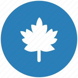 blue, canada, leaf, nature, round icon