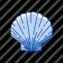 animal, marine animal, mollusk, ornament, scallop, seafood