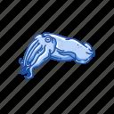 animal, cuttle, cuttlebone, cuttlefish, marine animal, mollusc, mollusk