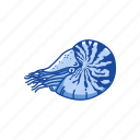 animal, chambered nautilus, mollusc, mollusk, nautilus, pearly nautilus, sea creature icon