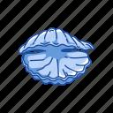 clamp, food, marine animal, mollusc, seafood, seashell, shell icon