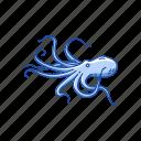 animal, marine animal, mollusc, mollusk, octopus, tentacles