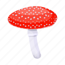 amanita, fly agaric, mushroom, poisonous, red, toxic