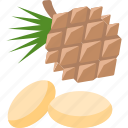 cone, fir, food, mushrooms icon