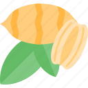 corn, food, mushrooms, nut icon