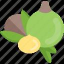 food, mushrooms, nut, sheet icon