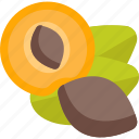 food, mushrooms, nut, pip, sheet icon