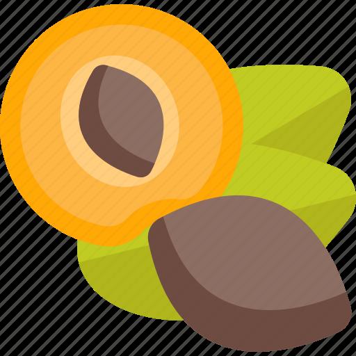 food, mushrooms, nut, pip, sheet icon