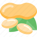 food, mushrooms, nut, seed, sheet icon