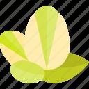 food, mushrooms, nut, pistachios icon