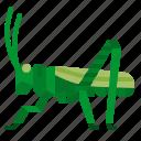 animals, bug, grasshopper, insect, locust icon