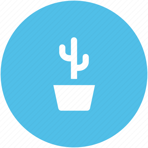 cactus, cactus in pot, desert, garden, gardening cactus, leaves, yard icon