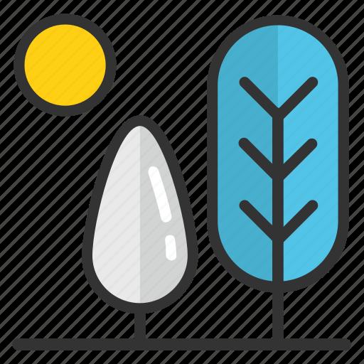 cedar tree, fir tree, larch tree, pine tree, sun with fir tree icon