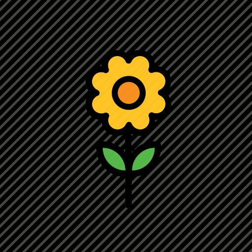 flower, natural, nature, sunflower, world icon