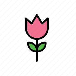 flower, natural, nature, rose, world icon