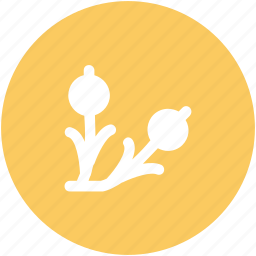 agriculture, garden, gardening, leaves, plant, plant growth icon
