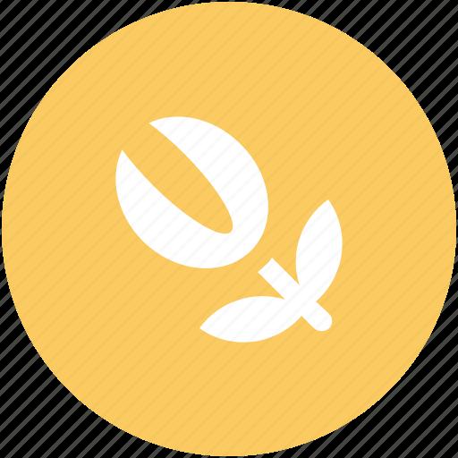 bud open, flower, garden, lotus, lotus bud, oriental icon