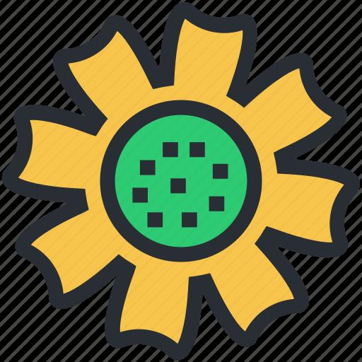 bachelors button, cornflower, flower, nature, wildflower icon