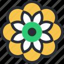 chinese flower, design element, decorative flower, flower, nature