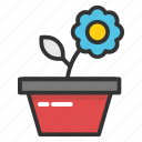 daisy plant, indoor plant, plant, pot plant, small plant icon