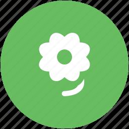 bloom, blossom, daisy flower, flower, spring flower icon