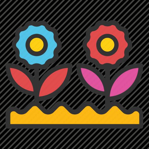 daisy, flowering plants, plantation, plants, small plants icon