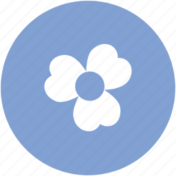 blossoming, floral, flower, sagittaria flower, sagittaria graminea, spring icon