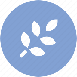 branches, ecologism, leaf branches, leaves, plant branch icon