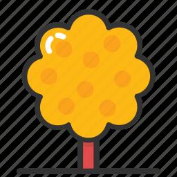 autumn garden, autumn tree, hybrid poplar, poplar tree, tulip poplar icon