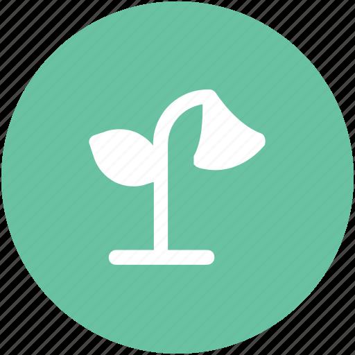 foliage, gardening, growing plant, plant, sapling, yard plant icon
