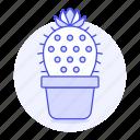 cactus, flourishing, flower, flowering, flowers, nature, on, plants, pot, spines, succulent, thorns, top