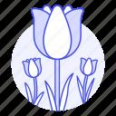 flourishing, flowering, flowers, horticulture, nature, pink, plants, tulip, tulips